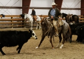 Buck Brannaman on his three-year-old stud colt at Standing Heart Ranch. This was the colt's second day on cattle, ever. Photos by TJ Holmes