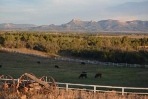 cattle&MesaVerde